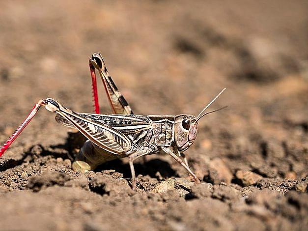 `பாத்திரங்கள் மூலம் ஒலி; 14 லட்சம் மெசேஜ்கள்;கட்டுப்பாட்டு அறைகள்!'- ஒடிசா அதிரடி நடவடிக்கை #Locust