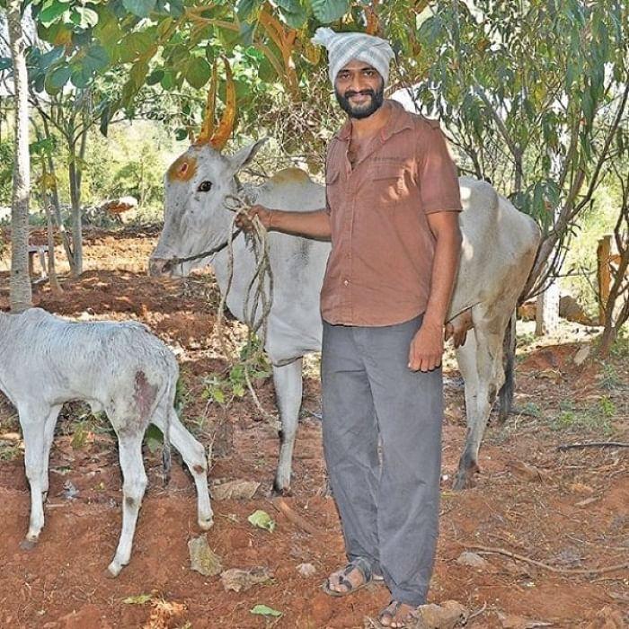 நாட்டு மாடுகளுடன் கிஷோர்