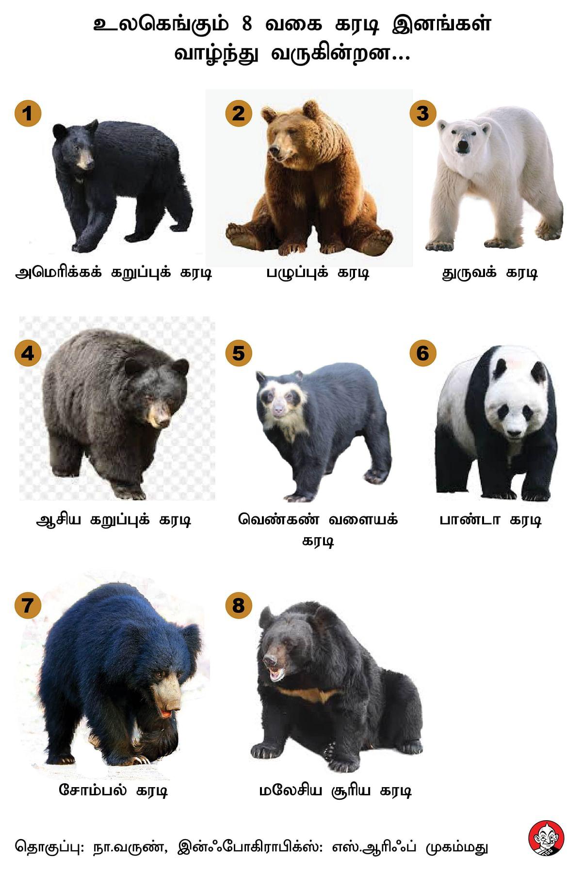 Types Of Bear