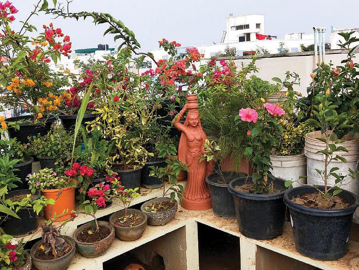 நம் ஆரோக்கியம் நம் வீட்டுச் செடிகளில்!