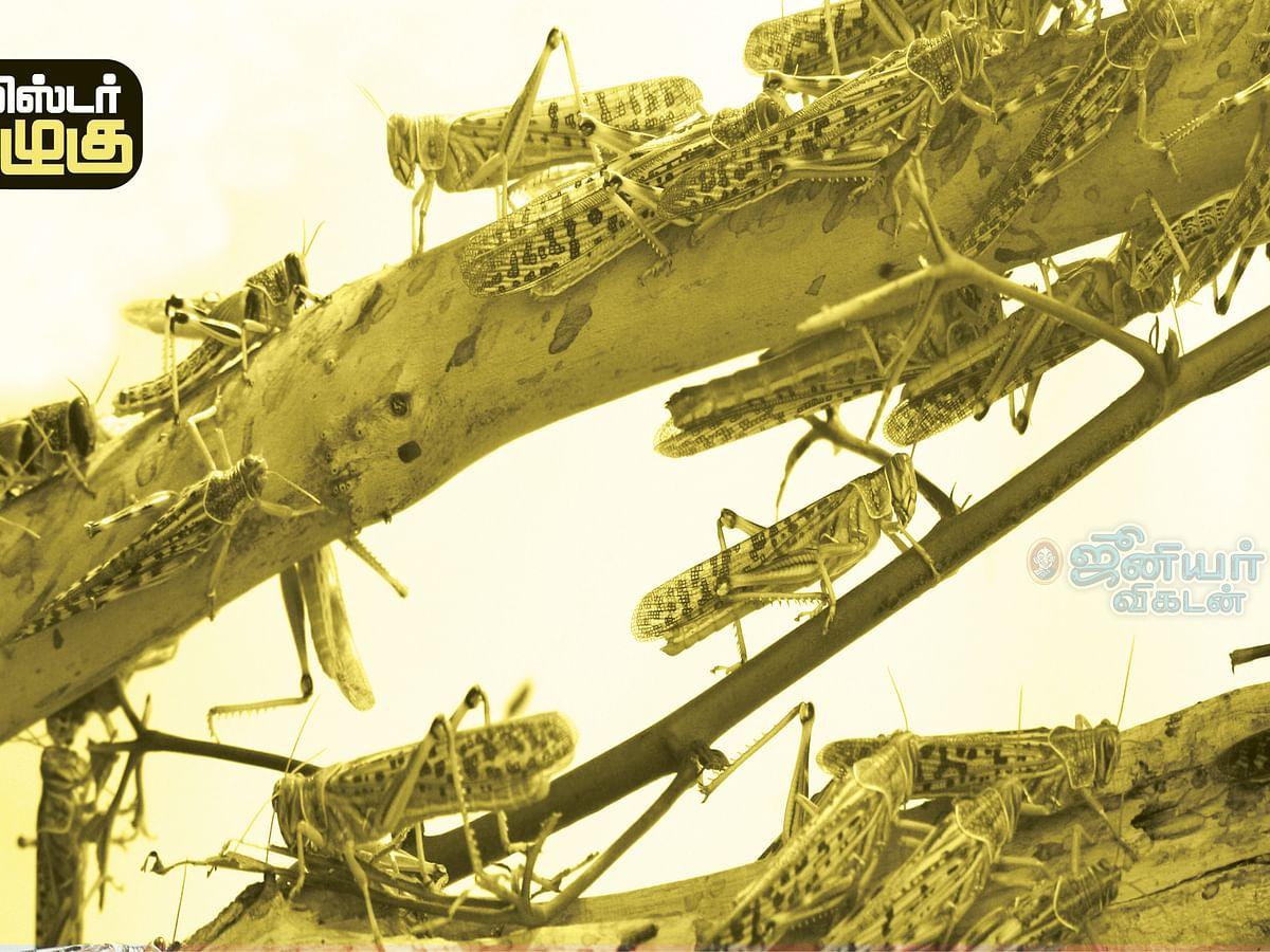 மிஸ்டர் கழுகு: வெட்டுக்கிளிகள் பெயரில் 'கட்டிங்'...