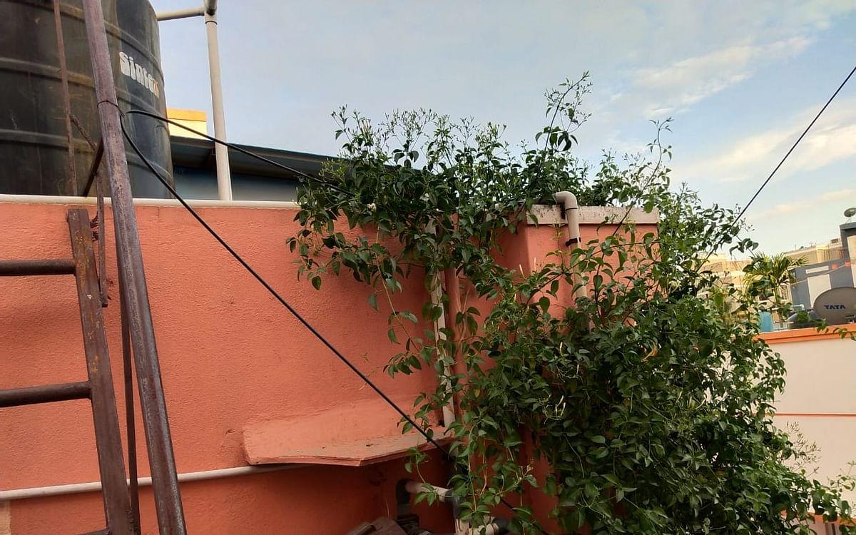 `முல்லைப் பூ பறிக்க முயற்சி செய்தார்.. ஆனால்?' - சென்னை விடுதி சமையலருக்கு நேர்ந்த சோகம்