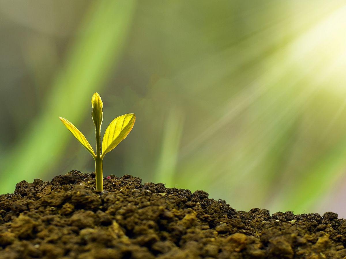 காலநிலை மாற்றத்துக்கு மரம் வளர்ப்பதுதான் தீர்வா? ஓர் அலசல்!