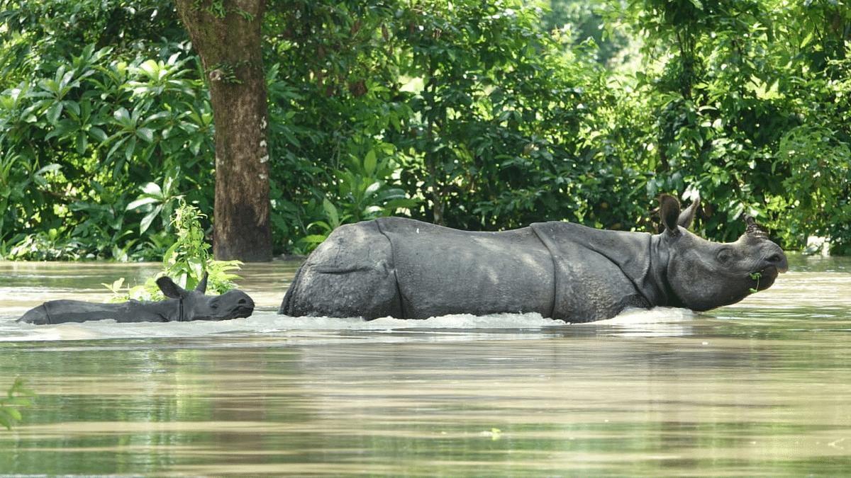 காசிரங்கா தேசியப் பூங்கா