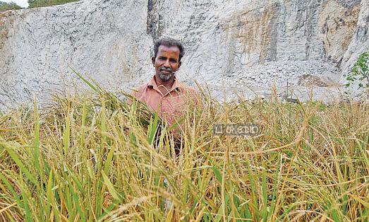 கல்குவாரி நிலத்தில் விளைந்த நெற்பயிர்களுடன் ராஜகுமாரன்