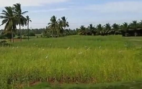 கரூர்: `வெடக்கோழியா பார்த்து பிடி!' - விவசாயிக்கு அதிர்ச்சிக் கொடுத்த திருடர்கள்