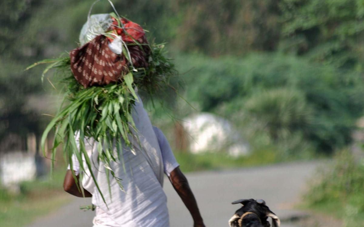 `என்கூட ஒரு நாளாச்சும் வாழ்ந்திருக்கலாம்ல பாட்டி!' - பெண்ணின் வாழ்நாள் ஏக்கம்  #MyVikatan