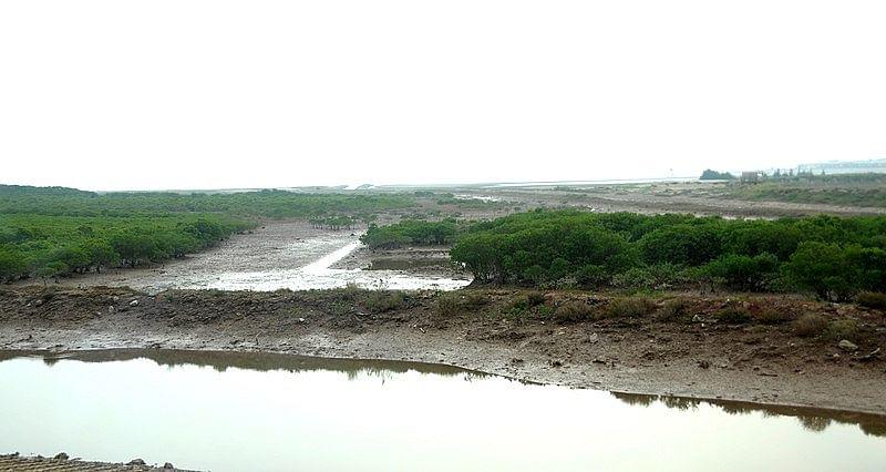 சதுப்பு நிலப் பகுதி, வியட்நாம்