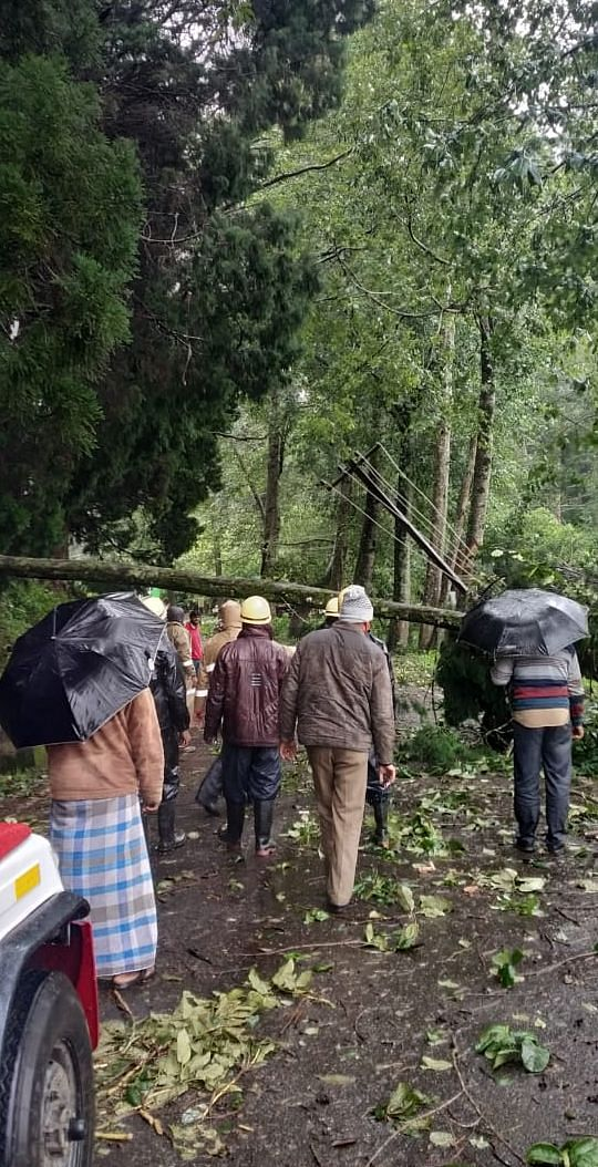 An uprooted tree that was blocking a road near Ooty being cleared by fire and rescue service personnel.