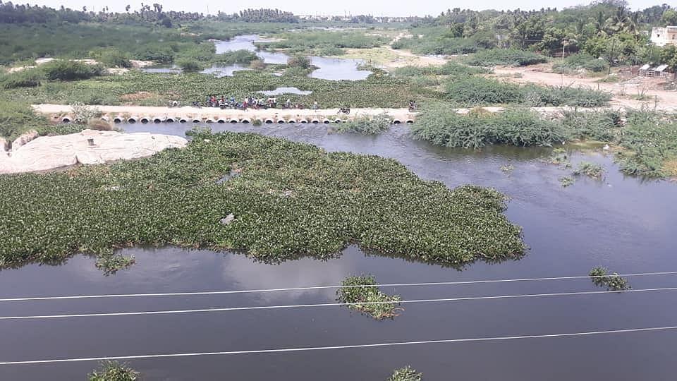 அமராவதி ஆற்றுக்குள் ஆகாயத்தாமரை