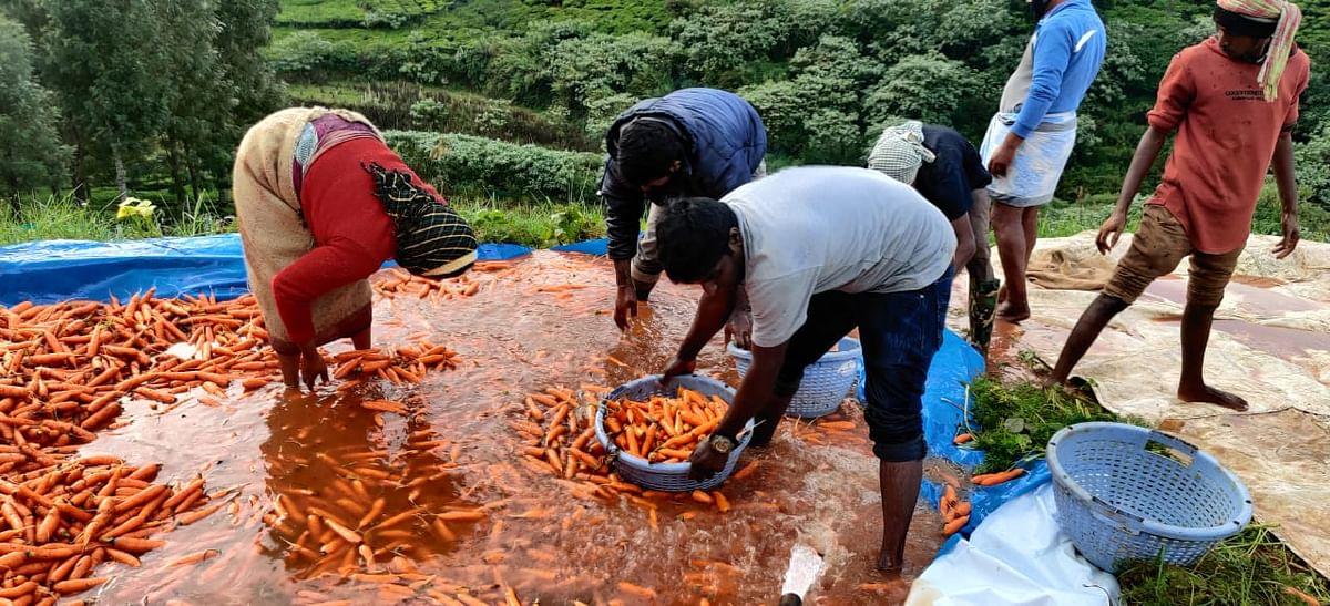 carrot washing