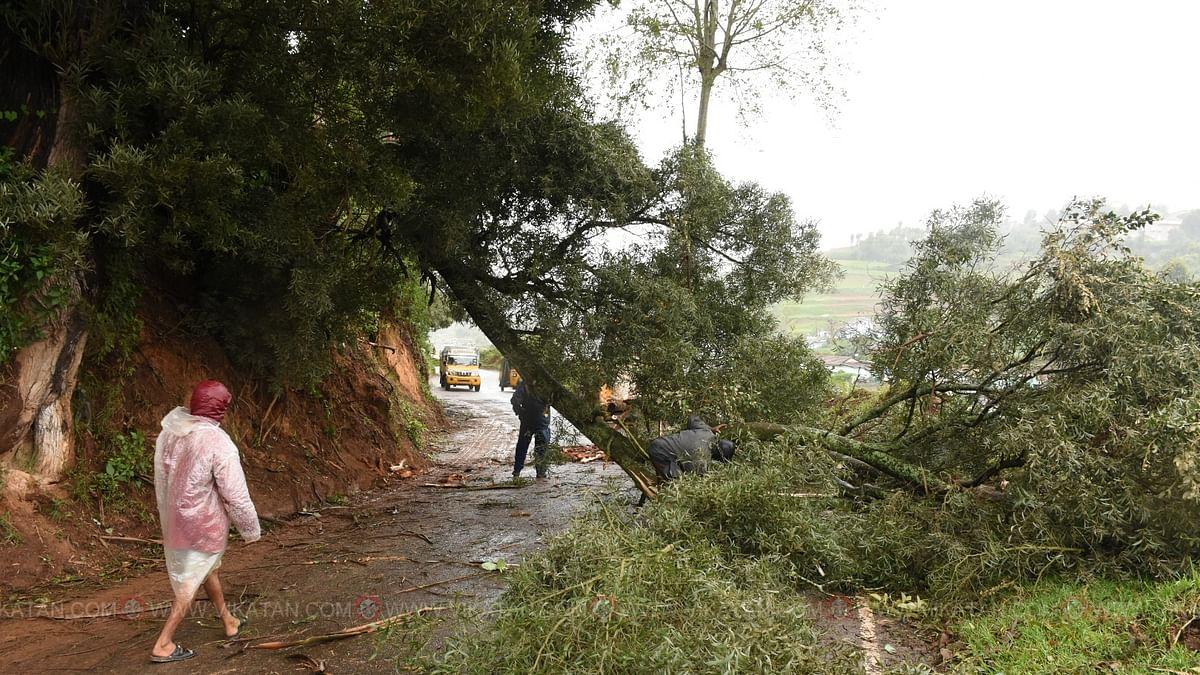 Heavy rains uprooted hundreds of trees across the Nilgiris.
