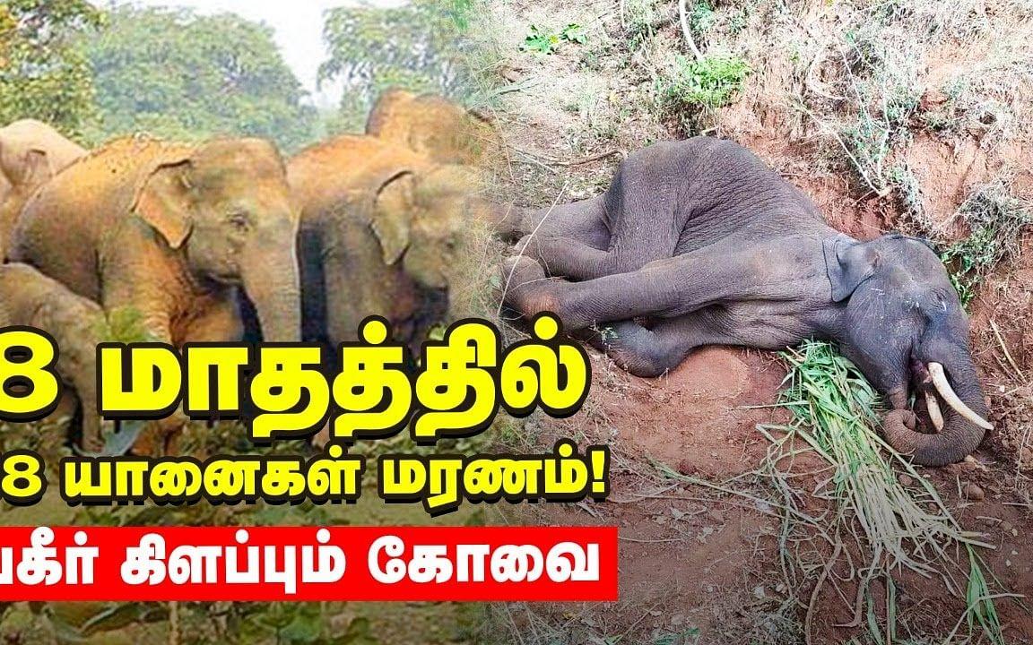 கோவைக்கு வரும் யானை... உயிர் தப்புமா?   Shock Report   Elephant Deaths
