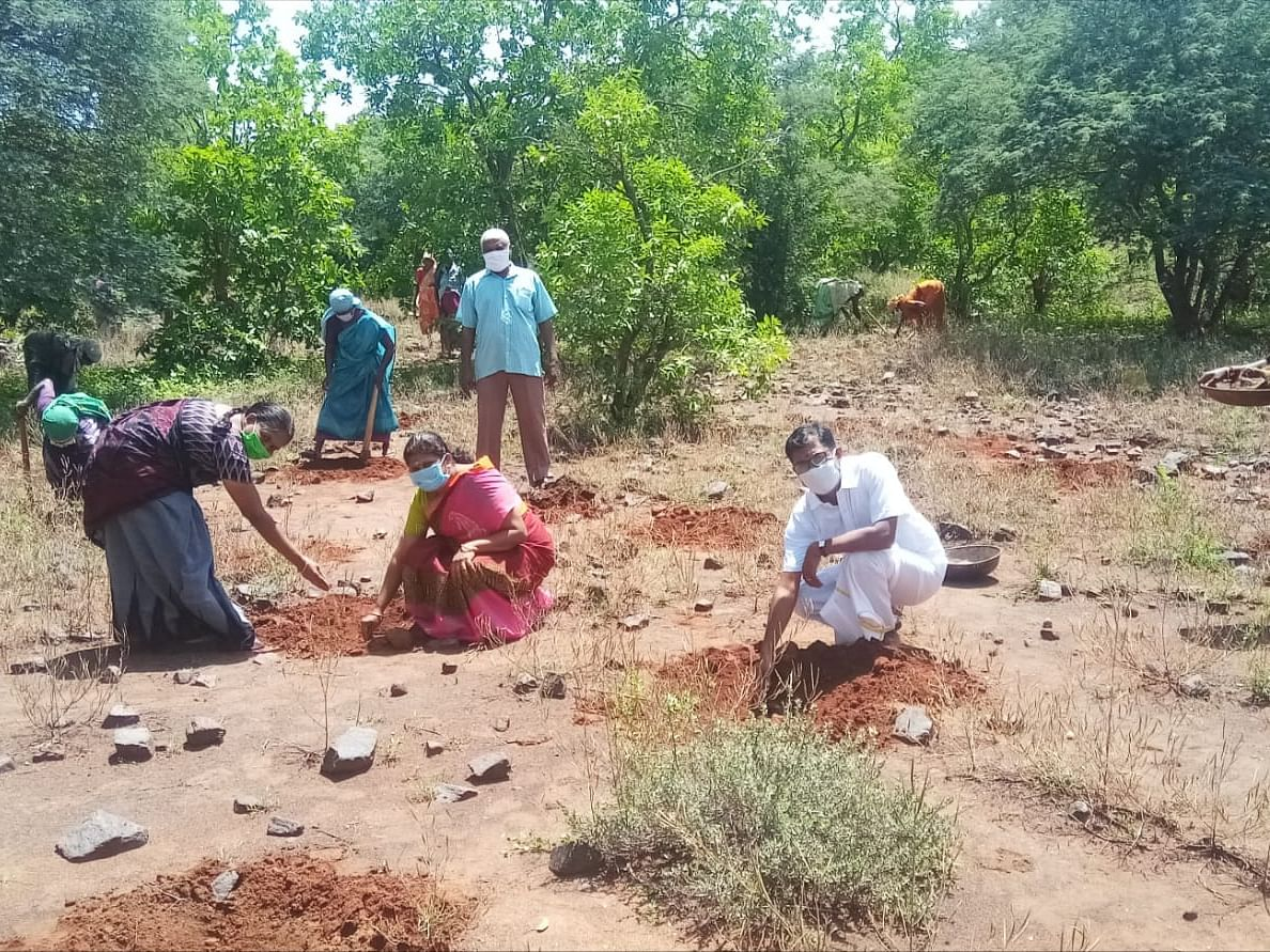 கரூர்: ''5,000 பனை நட்டாச்சு, ஒரு லட்சம் இலக்கு!'' - திருமண நாளில் அசத்திய தம்பதி