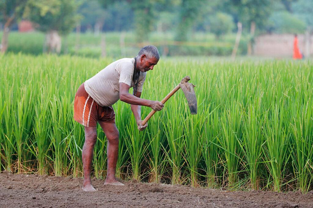 Farmer (Representational Image, File)