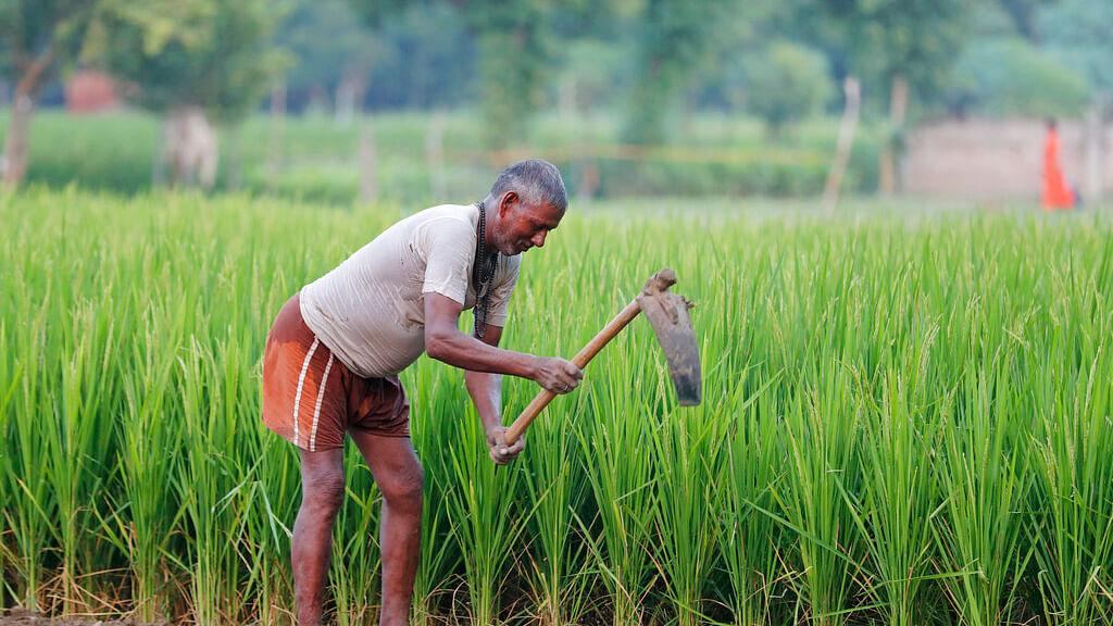 Farmer (Representational Image)