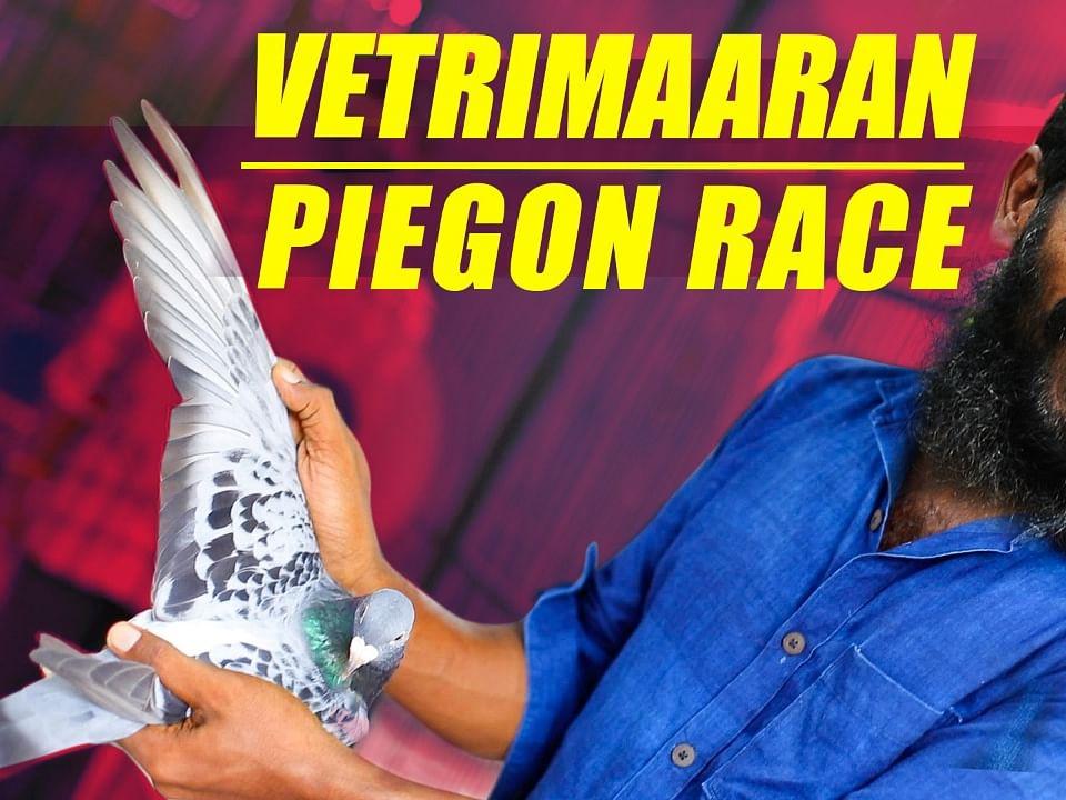 Vetrimaaran's Pigeon Loft | Pigeon Race