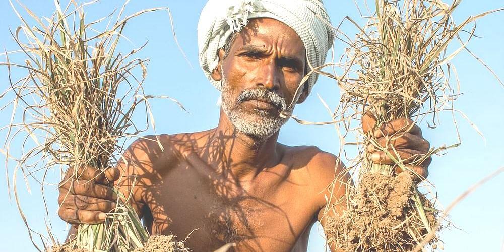 விவசாயி - கிசான்