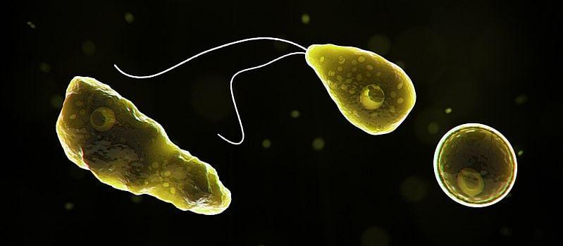 நேகலேரியா ஃபாவ்லேரி (Naegleria fowleri) / மூளையைத் தாக்கும் என்று குறிப்பிடப்படும் நுண்ணுயிரி