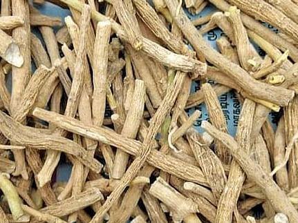 `மெலிந்த உடல் பருக்கும், பருத்த உடல் இளைக்கும்' - `அமுக்கரா' மூலிகை சிறப்புகள்