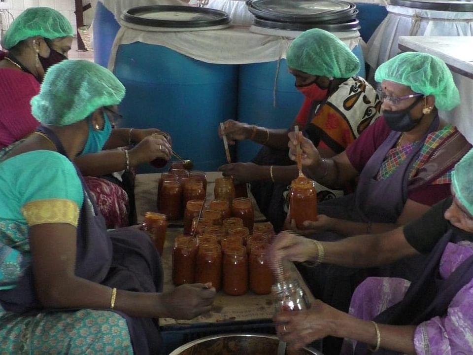 குன்னூர்: வரவேற்பைப் பெறும் ஜாதிக்காய் ஊறுகாய்... அசத்தும் அரசு பழவியல் நிலையம்!
