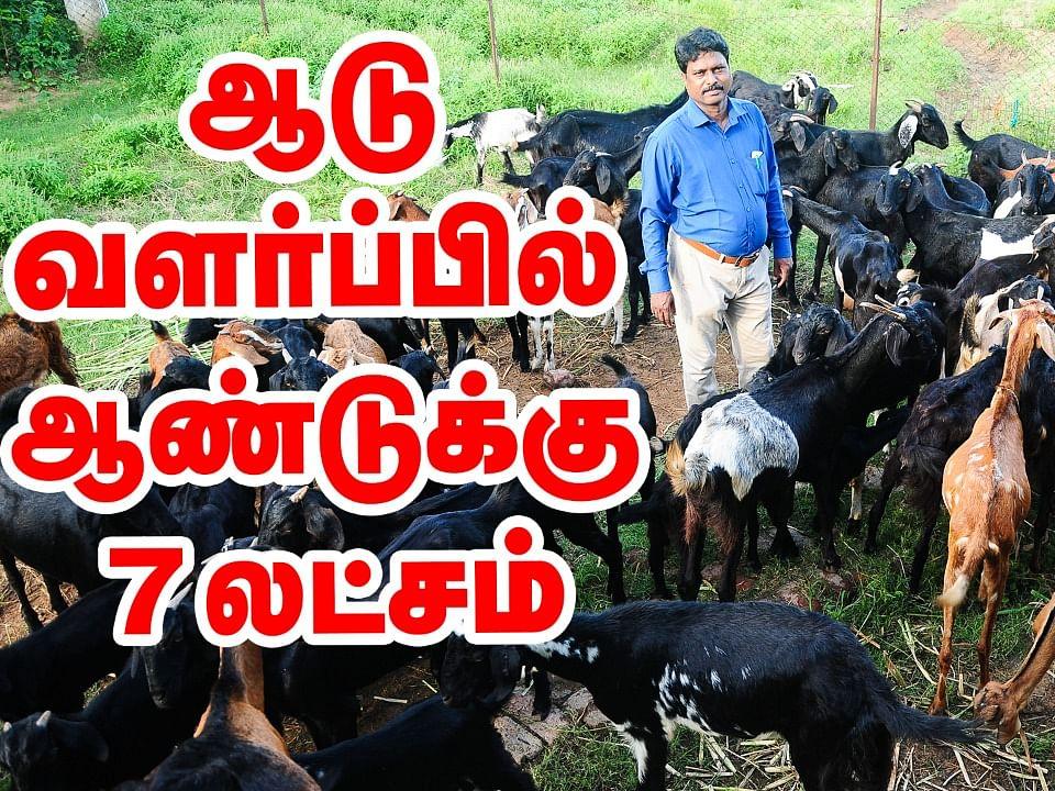 100 ஆடுகளில் ஆண்டுக்கு 7 லட்சம்... ஆடு வளர்ப்பு பற்றிய முழுமையான விளக்கம்! #GoatFarm #Agriculture