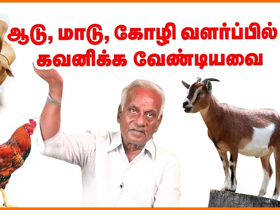 கால்நடை மருத்துவர் காசிபிச்சையின் கால்நடை வளர்ப்பு ஆலோசனைகள்! #CattleFarming #Agriculture