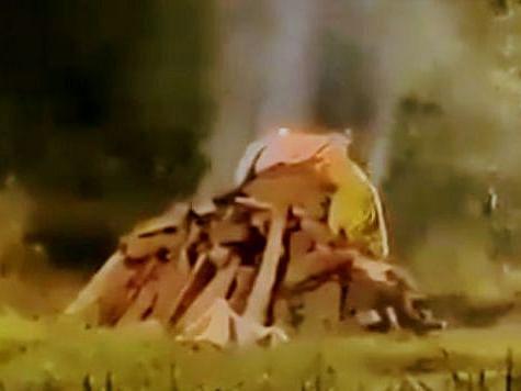 `நான்கு மாதங்களாகத் துன்புறுத்தப்பட்ட இளம்பெண்!' - ஹத்ராஸ் சம்பவத்தில் நடந்தது என்ன?