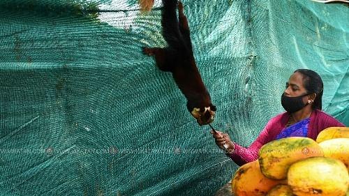 நசீமாவும் மலை அணிலும்