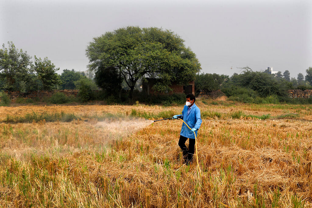 A Pusa Institute of Technology worker sprays bio-decomposer which converts agricultural waste into compost in his field