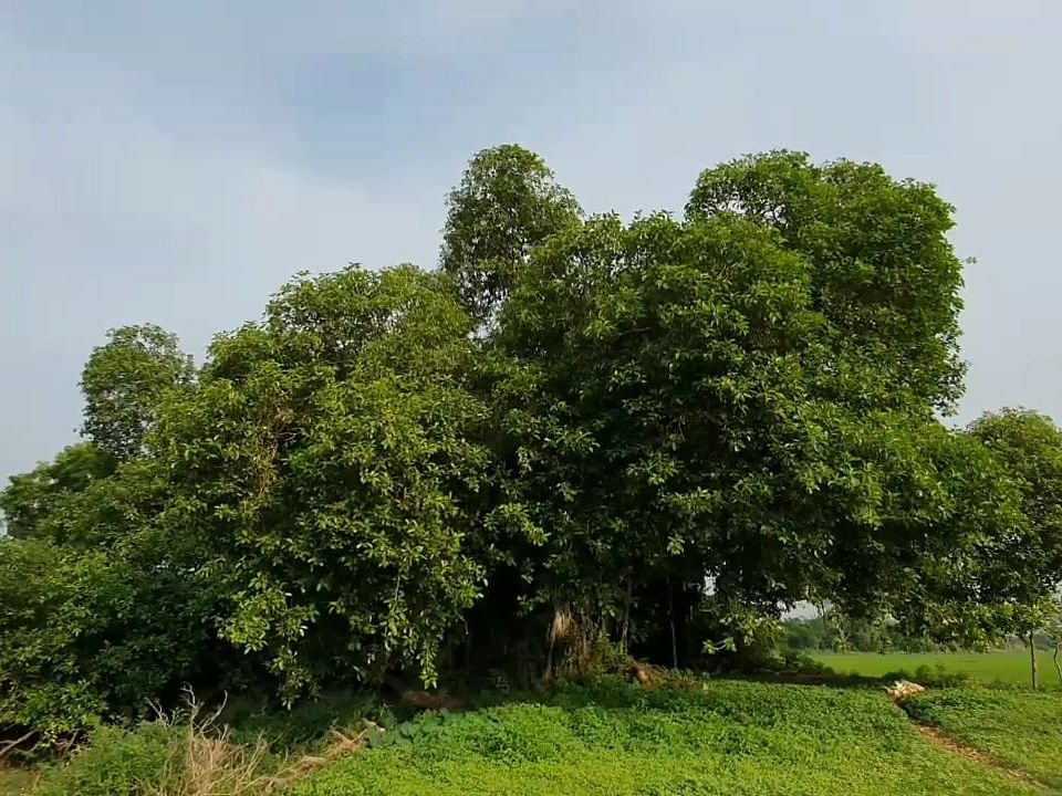 `பறவைகள் பயமில்லாமல் வாழணும்!' - 100 ஆண்டுகளுக்கும் மேல் வெடிச்சத்தம் இல்லாத கிராமம்