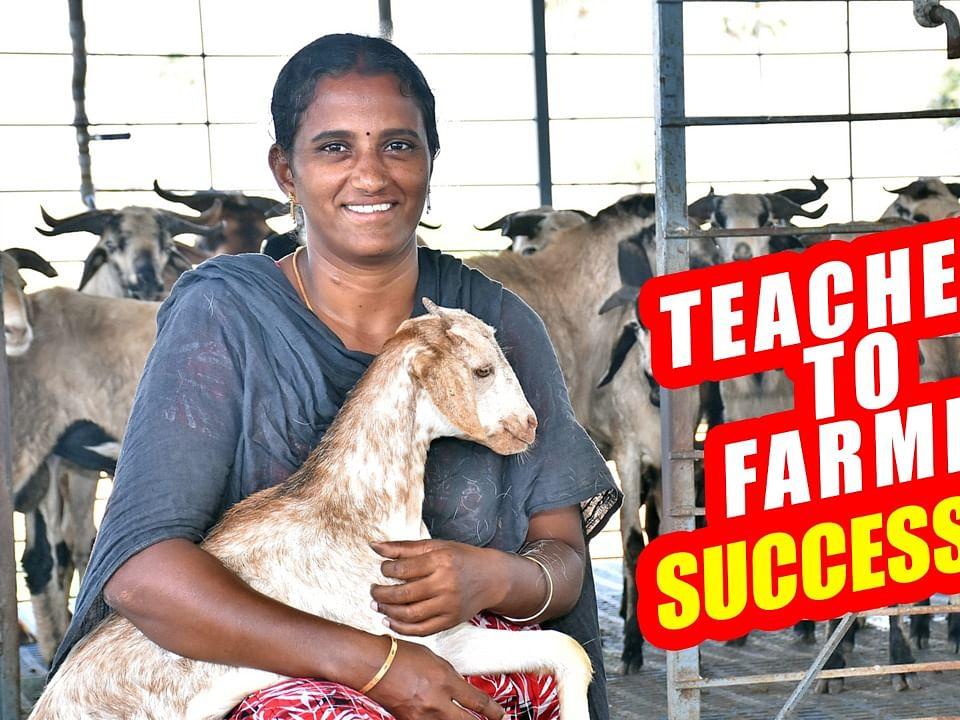 `Teacher to Farmer'... ஆடு வளர்ப்பில் அசத்தல் லாபம்! #GoatFarming