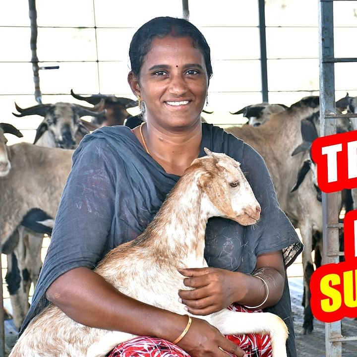 Saranya in Goat Farm