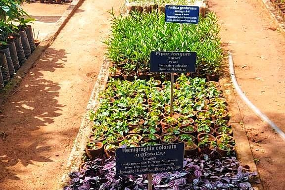 herbal grden
