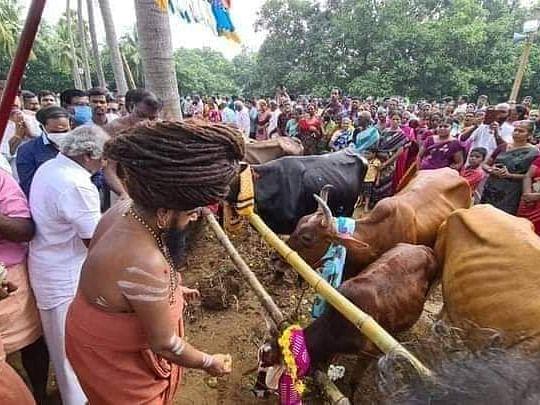 தருமபுர ஆதீனத்தில் உலக அமைதிக்காக 108 அஸ்வ பூஜை, கோ பூஜை, ரிஷப பூஜை, பைரவ பூஜை!