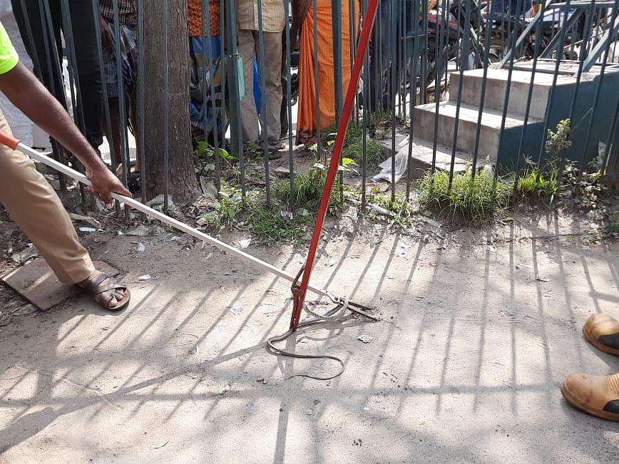 கரூர்: இருசக்கர வாகனத்தில்  நெளிந்த பாம்பு! - பீதியில் உறைந்த வாகன உரிமையாளர்