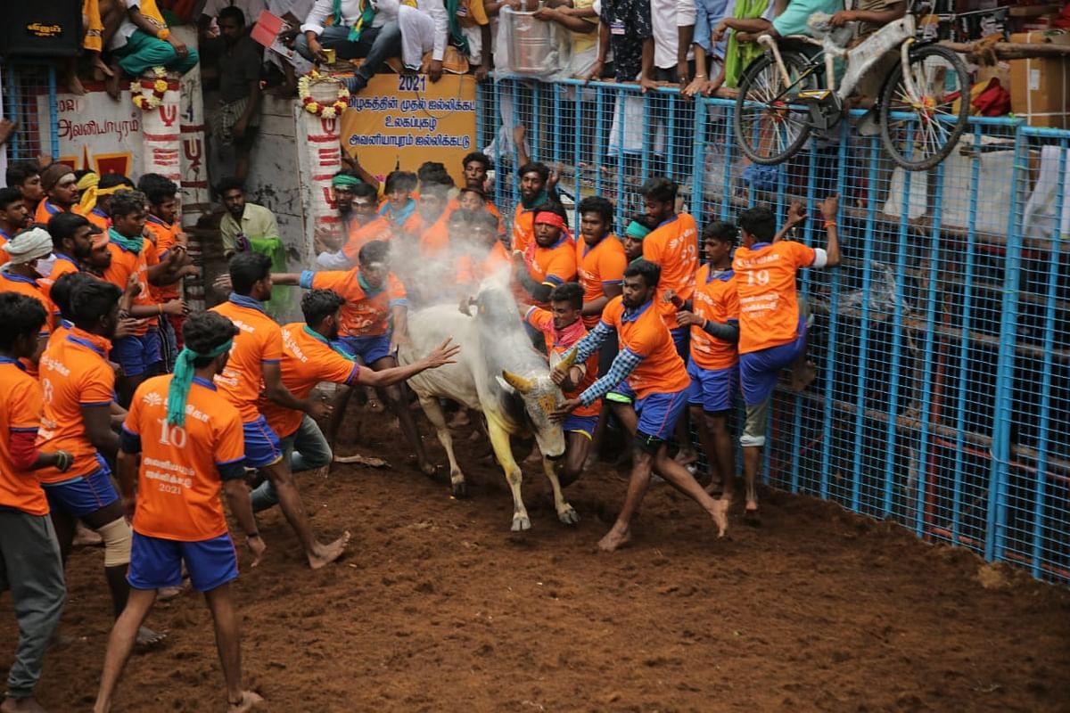 அவனியாபுரம் ஜல்லிக்கட்டு