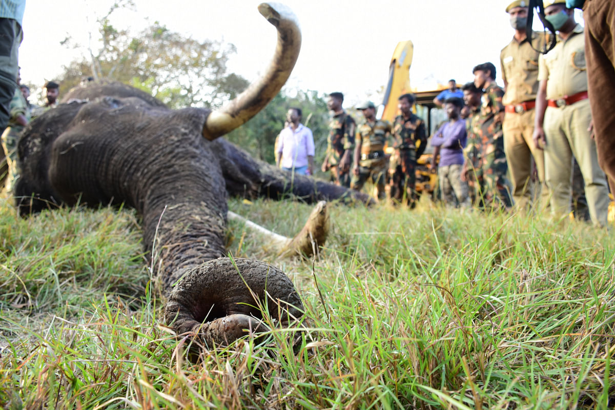 elephant died