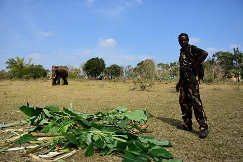 anti poaching watcher