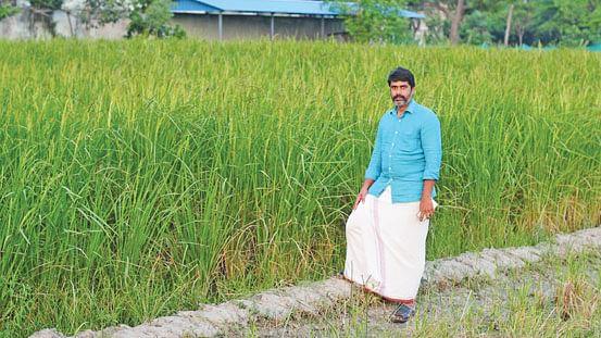 பாரம்பர்ய நெல் வயலின் அருகே டாக்டர் தினேஷ்பாபு