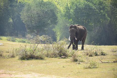 wounded elephant