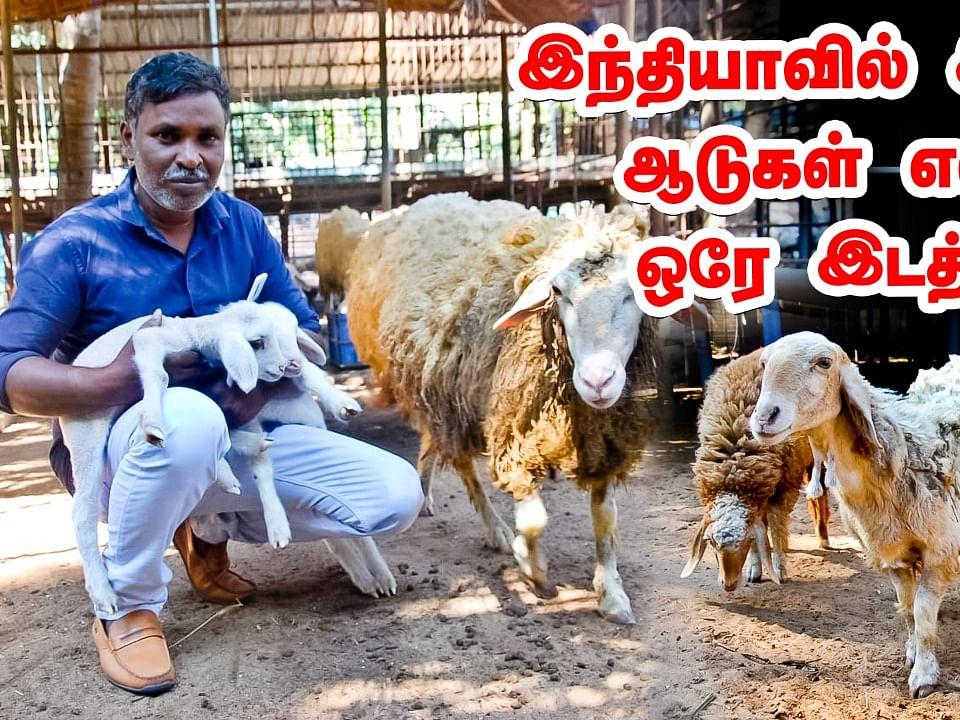 இந்தியாவிலுள்ள ஆடுகள் எல்லாம் ஒரே இடத்தில்... கால்நடை வளர்ப்பில் அசத்தும் சுதீந்திரன்!