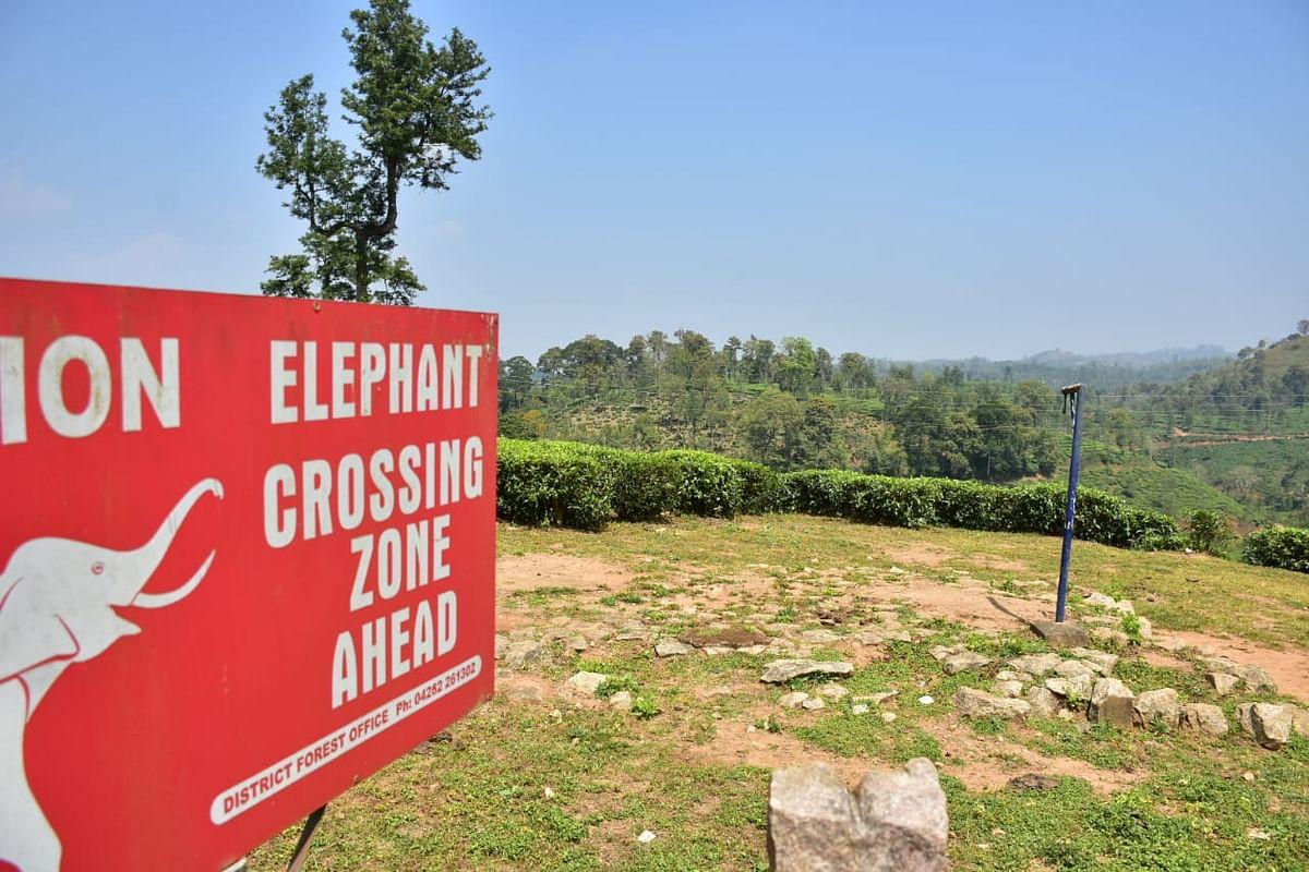 elehant crossing area