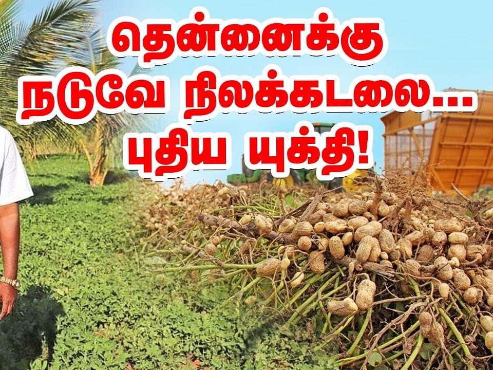 தென்னைக்கு நடுவே நிலக்கடலை... நிச்சய வருமானம் தரும் யுக்தி! | Groundnut Farming