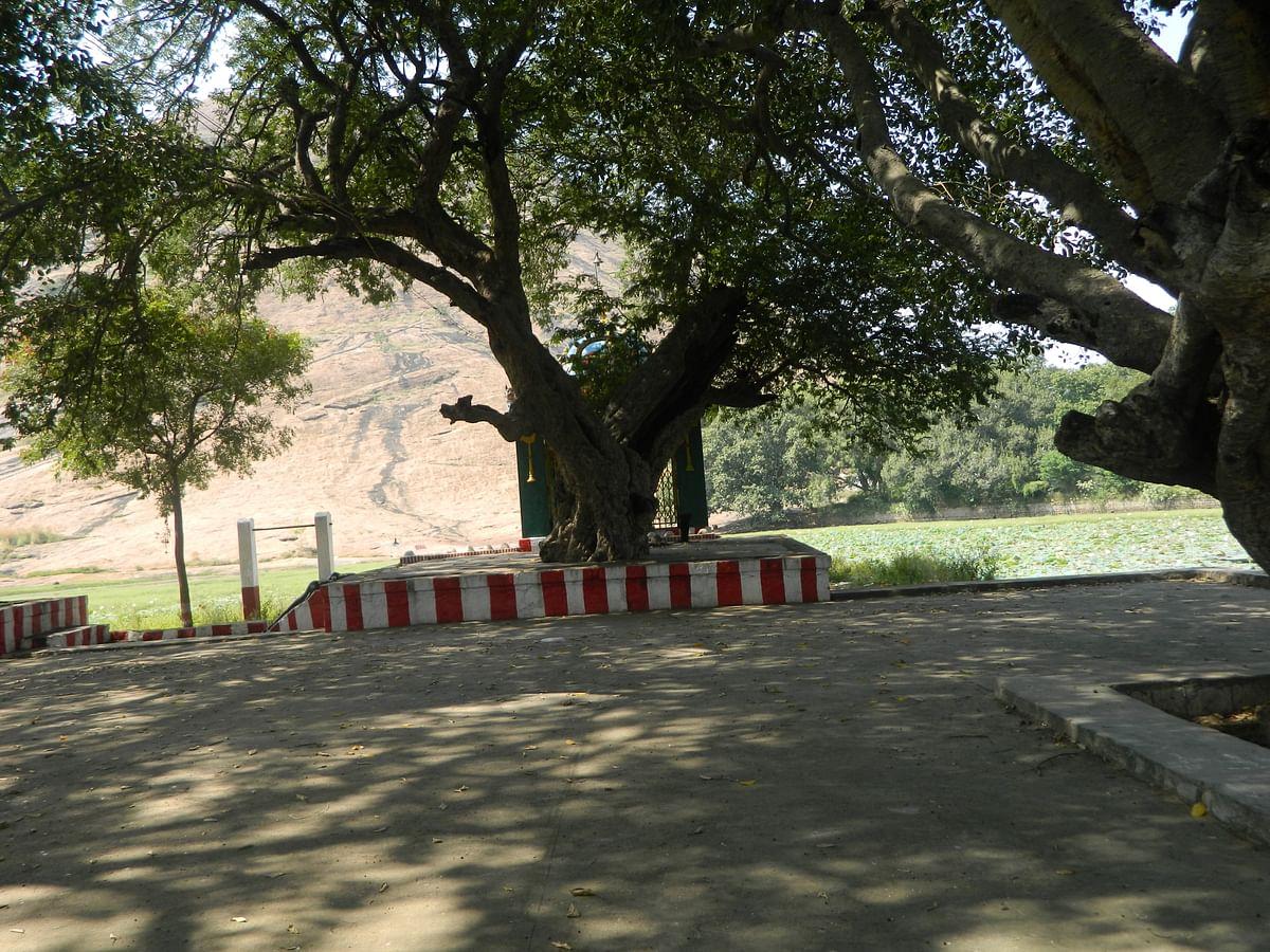 திடியன் மலை