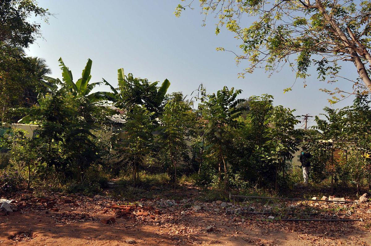 பொன்னுசாமி உருவாக்கிய குறுங்காடு