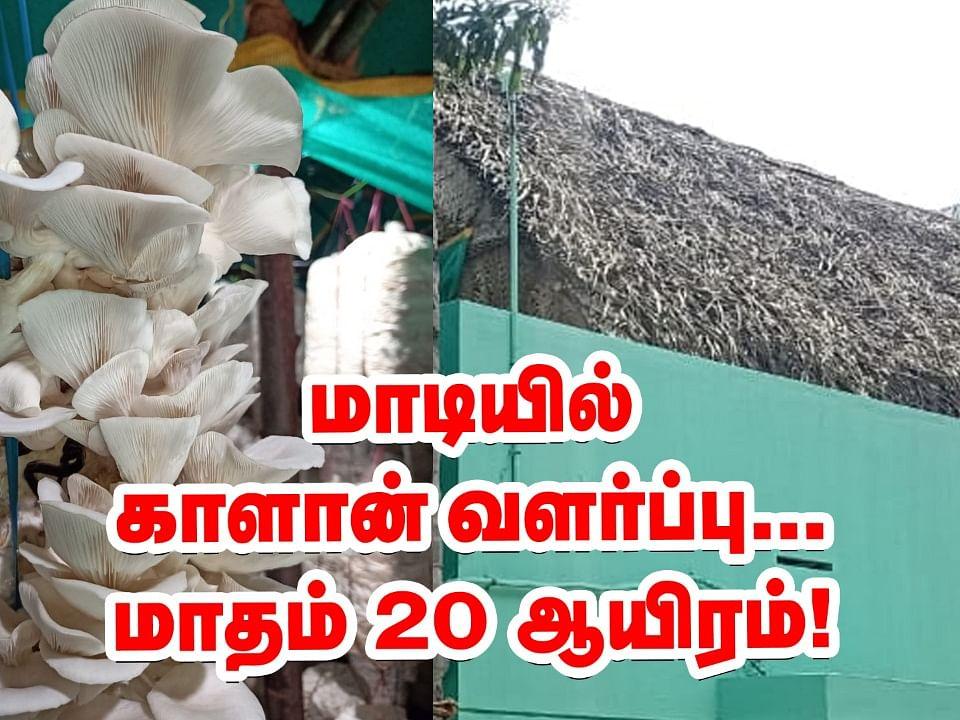 மாடியில் காளான் வளர்ப்பு... மாதம் ₹20,000... அசத்தும் சகோதரர்கள்! #MushroomCultivationTips