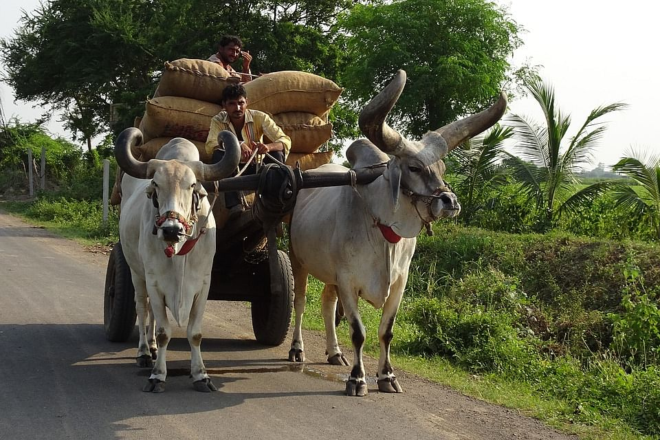 Bullock cart