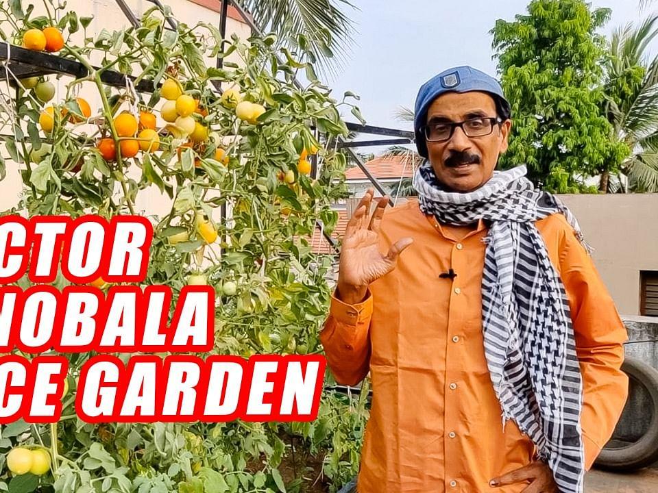 நடிகர் மனோபாலாவின் அழகிய மாடித்தோட்டம்! | Terrace Gardening