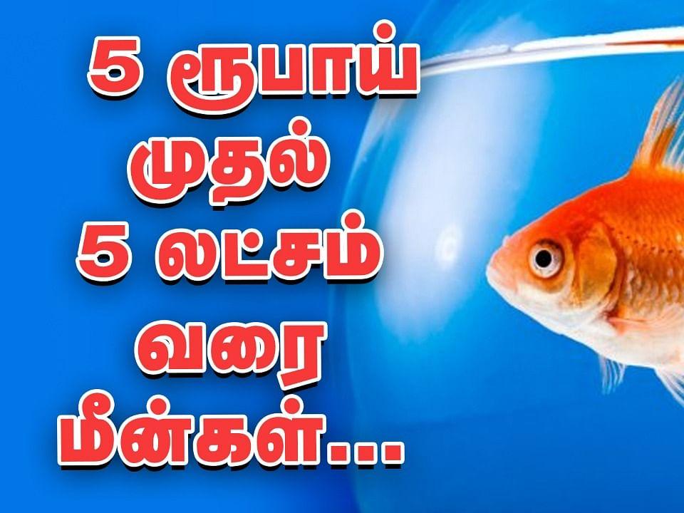 5 ரூபாயில் மீன்கள்... கொளத்தூர் மீன் மார்க்கெட் விசிட்! | Biggest fish market in tamilnadu